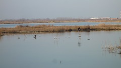 P1090789.JPG (papaniko) Tags: καλοχώρι πουλιά