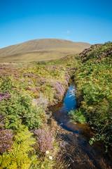 hoy | orkney, scotland (*Sabine*) Tags: schottland heide hoy landschaft orkney europa europe heath heathland heidelandschaft landscape scotland stromness vereinigteskönigreich gb
