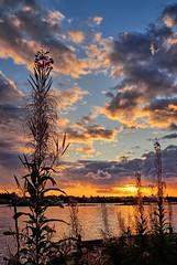 September evening, Norway (Vest der ute) Tags: xt20 norway rogaland haugesund sea water flowers sky clouds sunset evening grass fav200