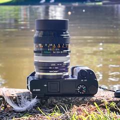 Canon FD 50mm ƒ/1.4 S.S.C. on SONY ⍺6000 (.: mike | MKvip Beauty :.) Tags: sony⍺6000 sonyilce6000 sonyalpha6000 sonyalpha sony alpha emount ⍺6000 ilce6000 canonfd50mmƒ14ssc canonfd canon fd ssc olympustoughtg5 olympus toughtg5 tg5 underwatercamera sis sensorstabilization primelens prime vintagelens vintageprime cameraporn gearshot availablelight naturallight backlight backlighting water lake karlsruhe germany europe mth mkvip