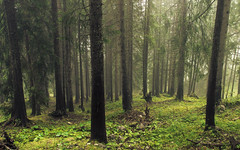 Forest Lights (Netsrak) Tags: alpen alps berg mountain nebel mist fog nebelhorn oberstdorf