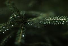 Start over (Tove Paqualin) Tags: start foliage fs180902 fotosondag bokeh green dark melancholy