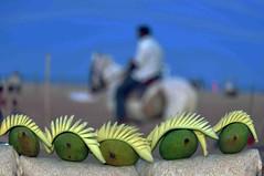 CSC_4837 (rajashekarhk) Tags: marinabeach beauty blue beach mangos beachwalk travel tourism tamilnadu travalphotography tourist green fruits horse colours chennai capital nikon natural southindia sky rajashekar hkr