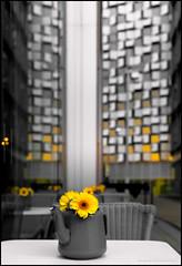 Tea flower pot (G. Postlethwaite esq.) Tags: dof sheffield sonya7mkii sonyalphadslr yorkshire bokeh city depthoffield flower fullframe mirrorless photoborder selectivefocus teapot yellow