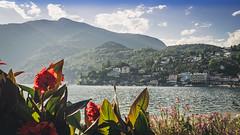 ascona (DaveGassmann) Tags: tessin ticino switzerland schweiz landscape landschaft olympus penf blue green water see lake weekend blume flower wolken beautiful