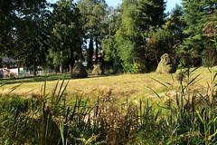 de drie ruiters (regionaal landschap Schelde-Durme) Tags: waasmunster kinderen pdpo lia natuurbeleving hooiland speelnatuur landschap landbouw biodiversiteit samenwerken