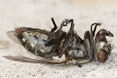 256/265  Dead fly
