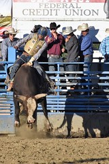 "Baker County Tourism – basecampbaker.com 47148 (Base Camp Baker) Tags: oregon ""easternoregon"" ""bakercountytourism"" basecampbaker ""basecampbaker"" ""bakercounty"" rodeo cowboys ""bakercitybroncandbullriding"" ""bakercity"" ""oregonrodeo"" ""minersjubilee"" oregonrodeo ramrodeo traveloregon travel tourism roughstock rodeolife bulls bullriding"