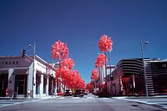 Beverly & Dayton (Infrakrasnyy) Tags: sony nex 5n infrared ir kolari kolarivision 550nm beverly hills 90210 palm trees cactus urban landscape