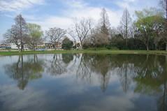 Mizumoto Park, Tokyo (runslikethewind83) Tags: japan tokyo park reflection reflect trees nature water surface green life 公園 水元公園