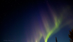 Purple and Green Waves (Katy on the Tundra) Tags: northernlights auroraborealis aurora nightsky