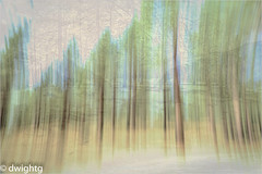Illusion ………….. HSS (dwight g) Tags: canon 6d 24105 trees motion ps topaz