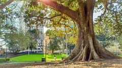 City park stop over (MTRobot) Tags: sydney urban nature city sunshine tree park