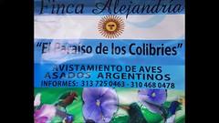 Paraiso de los colibries (Albert Tempette Alfonso) Tags: paraisodeloscolibries colibriessanctuary colibries bird pájaro oiseau cali colombia fincaalejandria