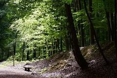 A place to rest (Jacques Teller) Tags: aplacetorest brussels bruxelles belgium belgique tree trees light bench forest intimatelandscape walking leaves green greenspace forêtdesoignes tervuren nikond7200 jacquesteller