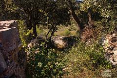 Camino de espinas (J.Gargallo) Tags: zarzas espinas camino vereda senda sendero vegetación piedra piedras pared verde hierba arbol arboles mosqueruela teruel aragón españa spain canon canon450d canonefs18200 eos eos450d 450d nature naturaleza
