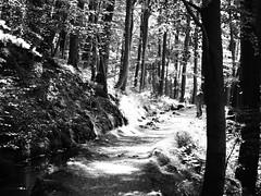 Hanggraben (1elf12) Tags: harz winterberg radau hanggraben wald forest germany deutschland
