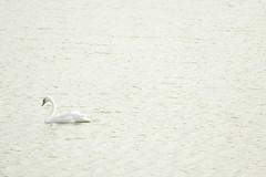 08092018-P1090565 (aurelledurand07) Tags: aout2018 baiedesomme marquenterre oiseau stagephoto