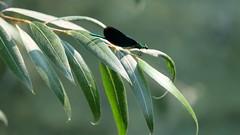 DSCF8386 (rmassart) Tags: m08 y2018 croatia plitvicka jezera plitvickajezera plitvichka lakes insect butterfly