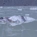 Tasman Lake & Glacier-4 thumbnail