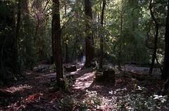 Scan-180919-0014 (alberthuynhphoto) Tags: big basin redwoods redwood state park 35mm fujifilm fuji superia 200 iso film nikon f3