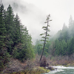 Outlier (Aaron Bieleck) Tags: hasselblad500cm 120film analog 6x6 square film filmisnotdead hasselblad mediumformat wlvf tree forest pnw pacificnorthwest oregon clouds fog landscape outdoots 150mmct fujipro160s or umpquariver