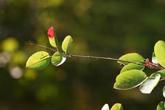 autumn glow (EllaH52) Tags: branch twig leaves autumn colours bokeh minimalism light shadows