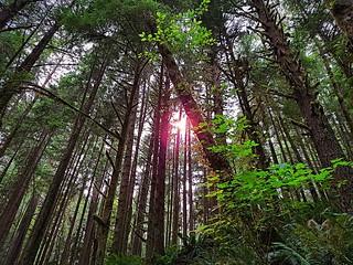 The sun illuminates the forest