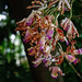 Como Conservatory 8/18/18 #comozoo #mysaintpaul #flowers