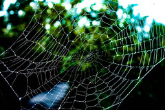 Nobody's Home (_Lionel_08) Tags: spider web bug insect nature wildlife wild