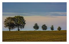 Row of trees (bavare51) Tags: bäume trees feld natur landschaft herbst himmel sky