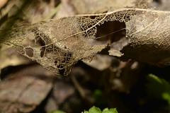 _DSC0993 (Me now0) Tags: micronikkor40mm macro nikond5300 park europe юженпарк софиябългарияевропа никонд5300 макро листо