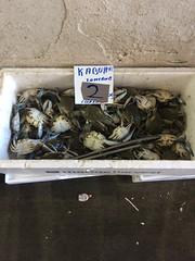 (Paradiso's) Tags: varvakeios agora athens central market fish crap greece