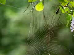 蜘蜘網02 (enno7898) Tags: panasonic lumix g9 lumixg9 vario 45200mm f4056 spiderwap