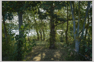 Un endroit vers les étangs