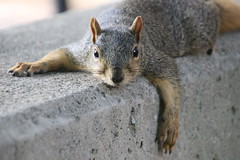 94/365/3746 (September 13, 2018) - Squirrels in Ann Arbor at the University of Michigan on September 13th, 2018