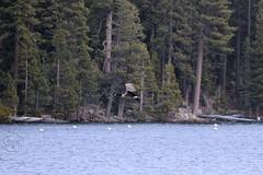 139. Emerald Bay, Canadian Goose (brottj316) Tags: laketahoe msdixieii emeraldbay canadiangoose