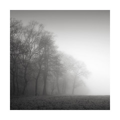 Haunted (GlennDriver) Tags: bw bnw blackandwhite black white mono monochrome mist misty trees rural country countryside sussex england uk eos canon nd sky tree park field grass