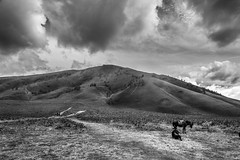 Bromo volcano, Indonesia (pas le matin) Tags: landscape paysage world travel voyage sky ciel grass herbe field mountain montagne volcan volcano bromo man homme cheval horse horserider rider bw nb blackandwhite noiretblanc monochtome asia asie indonésie indonesia southeastasia clouds cloudy cloud nuage nuages canon 7d canon7d canoneos7d eos7d