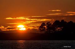 Soleil couchant sur le bassin d'Arcachon (didier95) Tags: coucherdesoleil ileauxoiseaux paysage mer bassindarcachon gironde ciel nuage soleil silhouette arbre