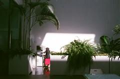紅裙阿嬤來得正是時候 (Old Soul Tai) Tags: minolta x700 mc wrokkorhh 35mm 118 fujicolor superia xtra 400 expired 112017