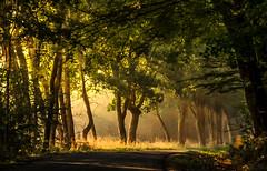 ...ein sanfter ort (st.weber71) Tags: nikon nrw niederrhein natur deutschland d850 hünxe wald bäume tree sonne sonnenstrahlen sonnenschein sonnenlicht outdoor landschaft landscape