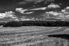 Goin' up the country (Piotr_PopUp) Tags: mazury wejsuny poland polska landscape travel nature cloud clouds blackandwhite blackwhite bw monochrome mono field harvest