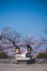 Chiba Castle Sakura - Tokyo, Japan (inefekt69) Tags: tokyo japan 東京 日本 nikon d5500 chiba chibacastle sakura cherry blossoms flowers spring hanami nature さくら 桜 花見 千葉 千葉城