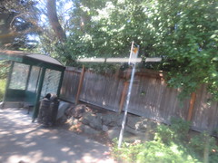 IMG_8321 (Andy E. Nystrom) Tags: bellevue washington wa bellevuewashington
