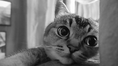 Night eyes close-up #POV (Ker Kaya) Tags: cat eyes bw monochrome pov pointofview flickrfriday kerkaya sony sonydscrx10m4 blackandwhite night macro face portrait cute sweet kitten kitty lovely look looking proxi closeup dof depthoffield backlight carlzeiss rx10m4 rx10miv rx10