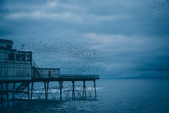 When the birds leave Aberystwyth (*M.*) Tags: aberystwyth wales sky clouds storm birds sea thebluehour