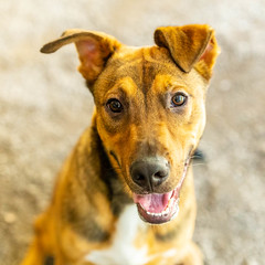 Jif15Sep201811.jpg (fredstrobel) Tags: dogs pawsatanta atlanta usa animals ga pets places pawsdogs decatur georgia unitedstates us