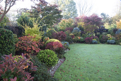View towards pagoda in late autumn. (Four Seasons Garden) Tags: four garden england english uk walsall colour foliage leaves 2017 flowers deciduous autumn conifer evergreen acers japanese maple marie tony newton red blue yellow green october palmatum