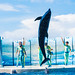 Jump! At the Dolphins and Sea Lions Show of Enoshima Aquarium, Fujisawa : イルカとアシカのショー(新江ノ島水族館)